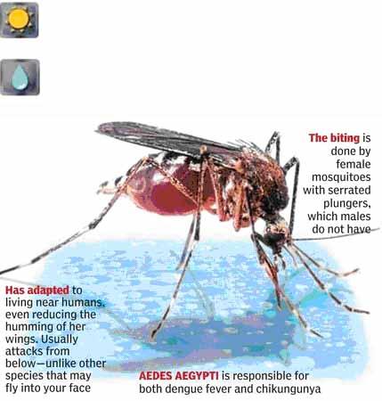 PATEL HOMOEO CLINIC: Chikungunya