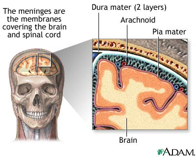 meninges-of-the-brain